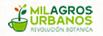JABONCILLO: El verdadero jabón ecológico